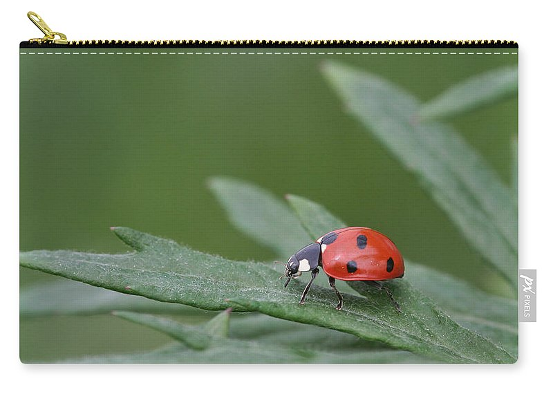 Lady Bird Carry-all Pouch featuring the photograph Lady Bird by Dreamland Media