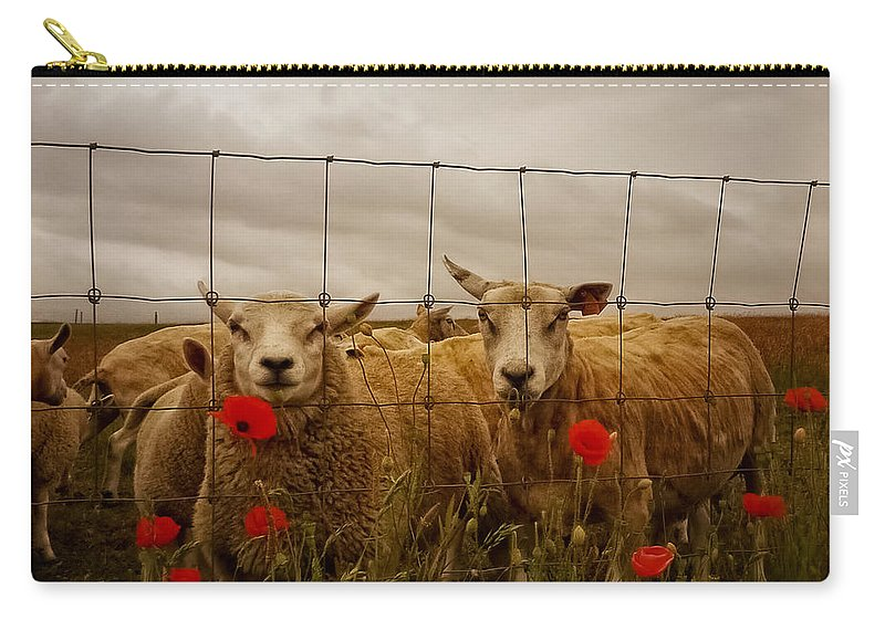 Animal Carry-all Pouch featuring the photograph Lambs by TouTouke A Y