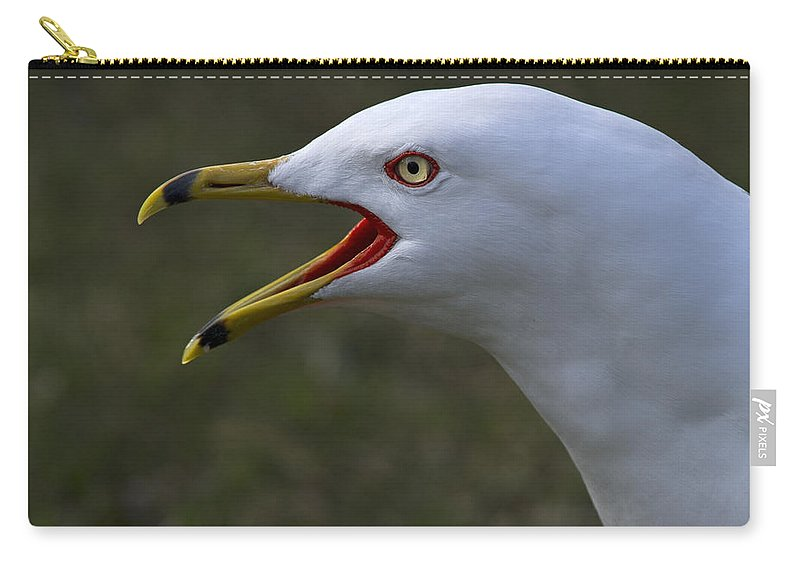 Festblues Carry-all Pouch featuring the photograph Larus Delawarensis... by Nina Stavlund