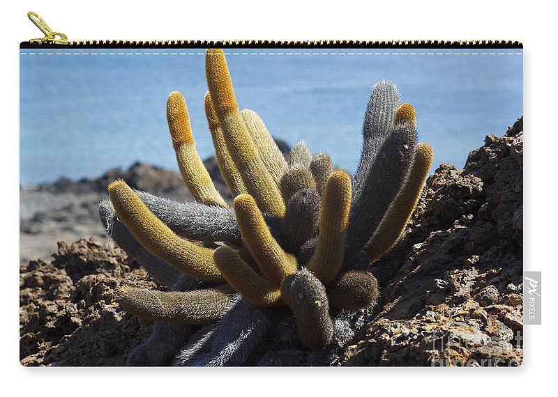 Brachycereus Nesioticus Carry-all Pouch featuring the photograph Lava Cactus Galapagos by Jason O Watson