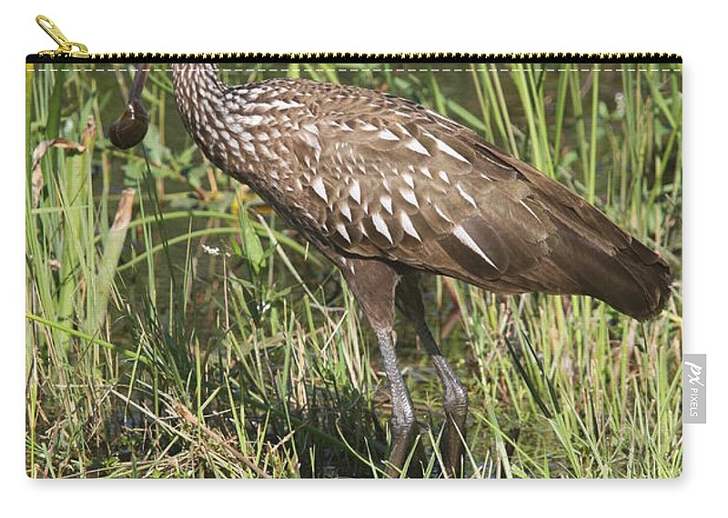 Limpkin Carry-all Pouch featuring the photograph Limpkin In The Glades by Christiane Schulze Art And Photography