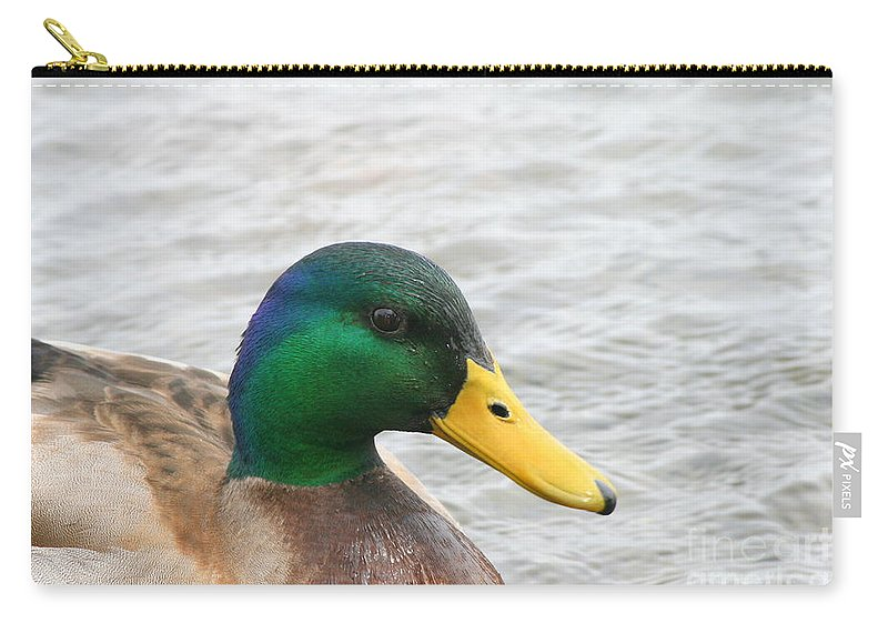 Mallard Carry-all Pouch featuring the photograph March Mallard by Neal Eslinger