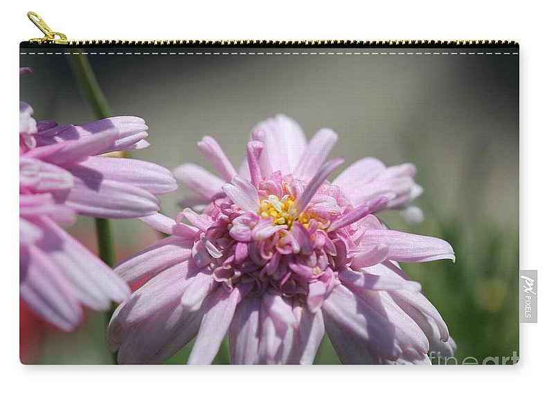 Mccombie Carry-all Pouch featuring the photograph Marguerite Daisy Named Double Pink by J McCombie