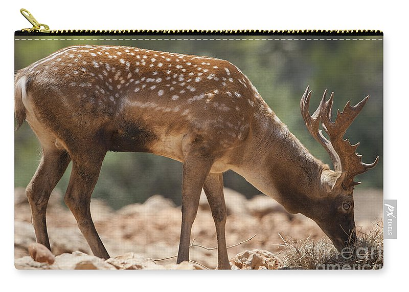 Fallow Carry-all Pouch featuring the photograph Mesopotamian Fallow Deer 2 by Eyal Bartov