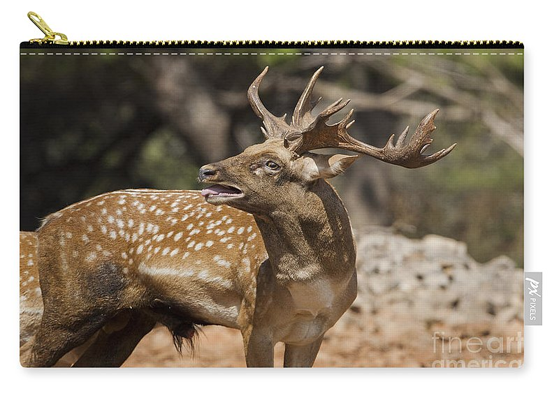 Fallow Carry-all Pouch featuring the photograph Mesopotamian Fallow Deer 4 by Eyal Bartov