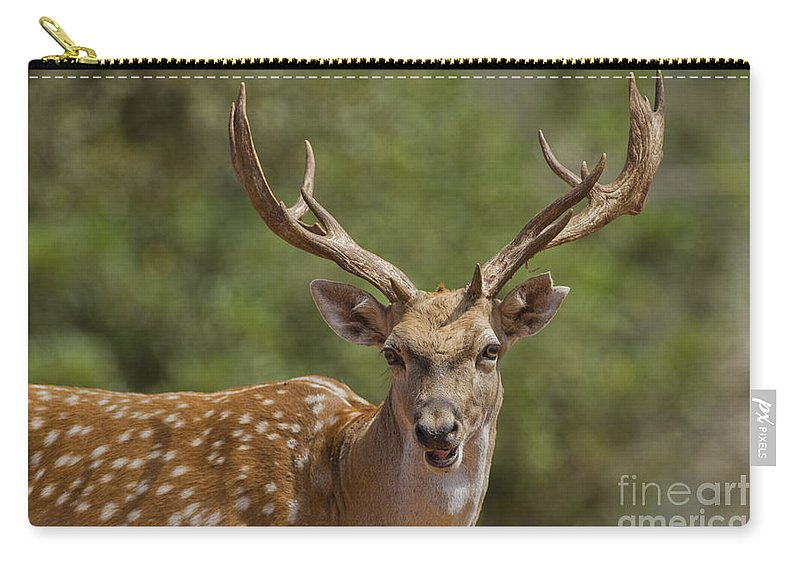 Fallow Carry-all Pouch featuring the photograph Mesopotamian Fallow Deer by Eyal Bartov