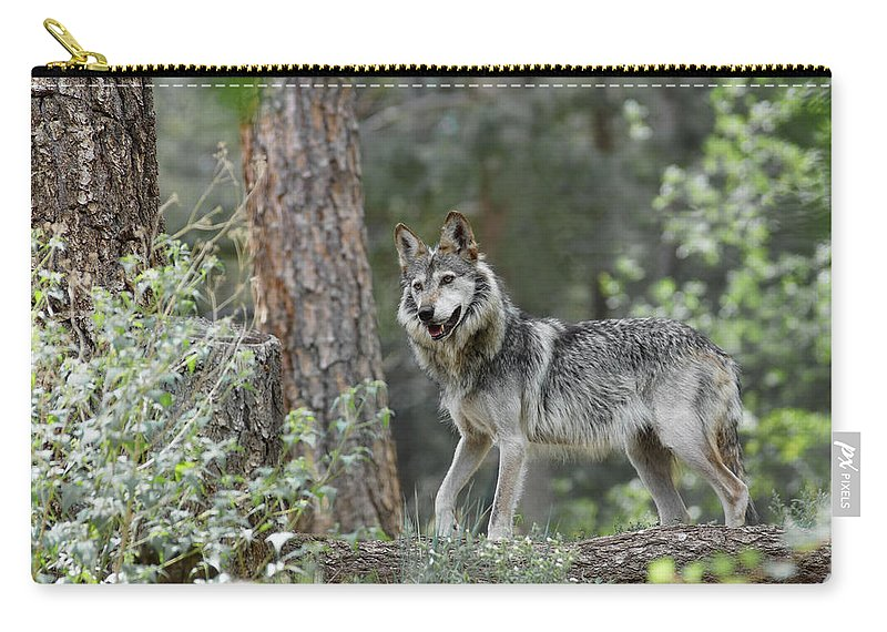 Wolf Carry-all Pouch featuring the photograph Mexican Grey Wolf 1 by Ernie Echols
