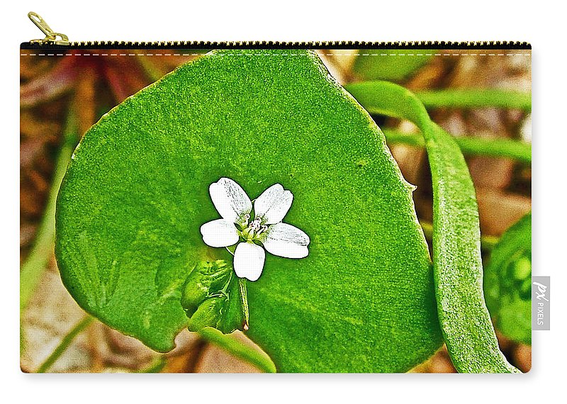 Miner's Lettuce In Park Sierra Near Coarsegold Carry-all Pouch featuring the photograph Miner's Lettuce In Park Sierra Near Coarsegold-california by Ruth Hager
