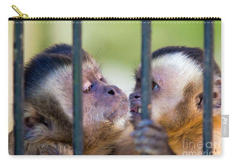 Animal Carry-all Pouch featuring the photograph Monkey Species Cebus Apella Behind Bars by Michal Bednarek