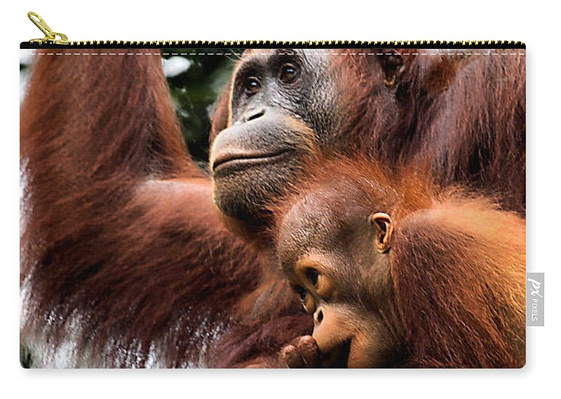 Orangutan Carry-all Pouch featuring the photograph Mother And Baby Orangutan Borneo by Carole-Anne Fooks