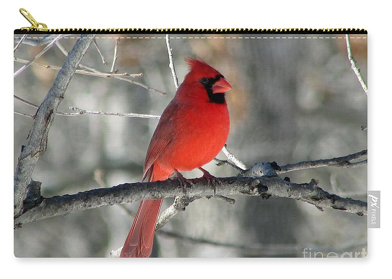 Cardinal Carry-all Pouch featuring the photograph Northern Cardinal 2 by Jamie Smith