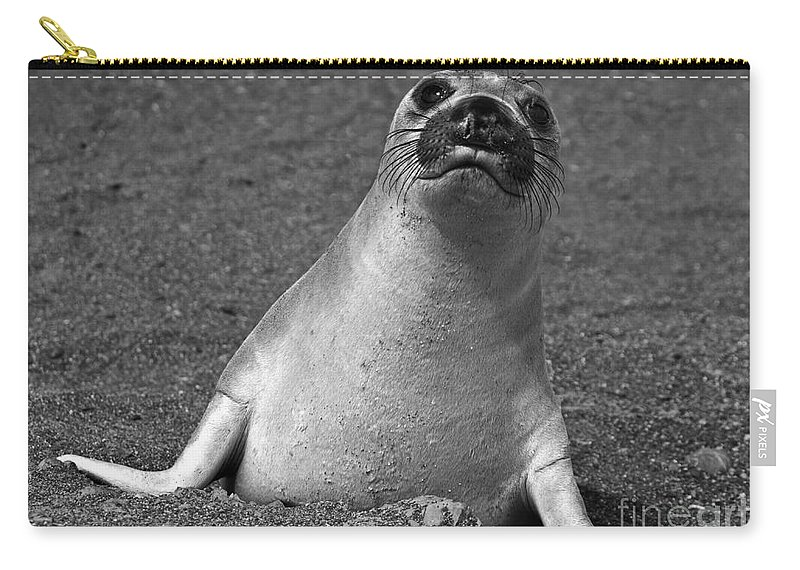 Mirounga Angustirostris Carry-all Pouch featuring the photograph Northern Elephant Seal Weaner by Liz Leyden