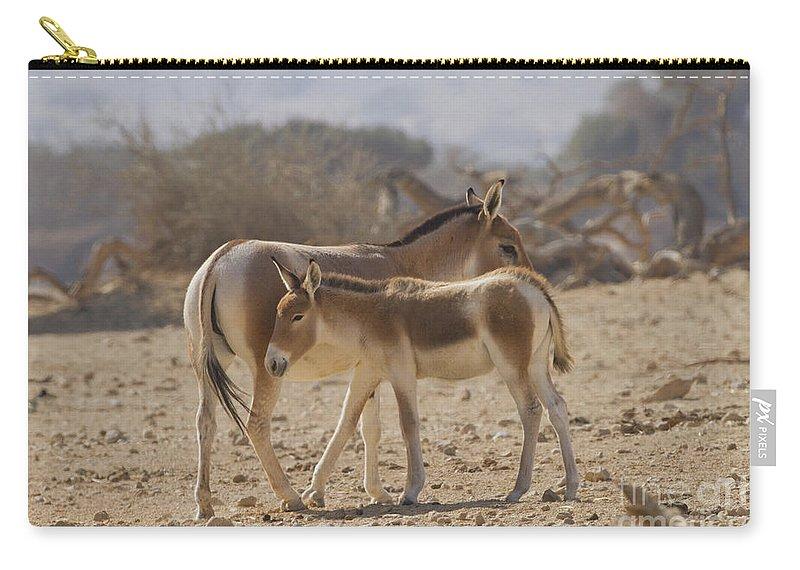Equus Hemionus Carry-all Pouch featuring the photograph Onager Equus Hemionus 1 by Eyal Bartov