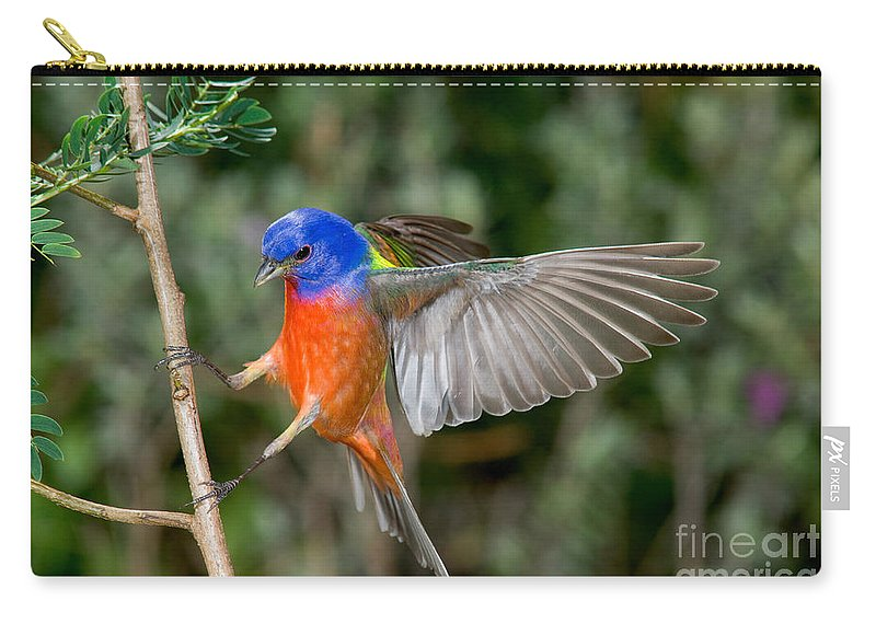 Fauna Carry-all Pouch featuring the photograph Painted Bunting by Anthony Mercieca