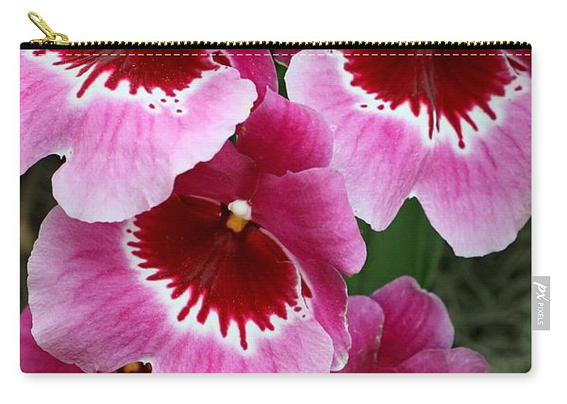 Orchid Carry-all Pouch featuring the photograph Pansy Orchid 1 by Allen Beatty
