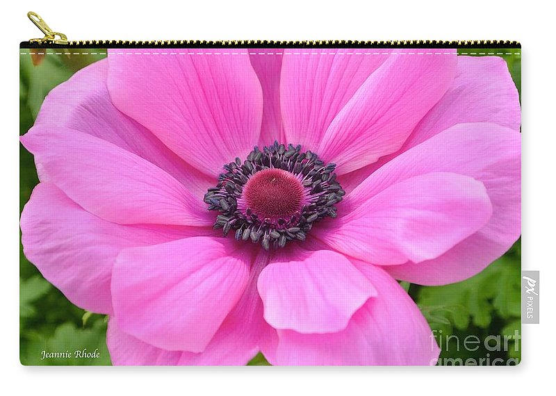 Pink Flower Carry-all Pouch featuring the photograph Pink Anemone by Jeannie Rhode