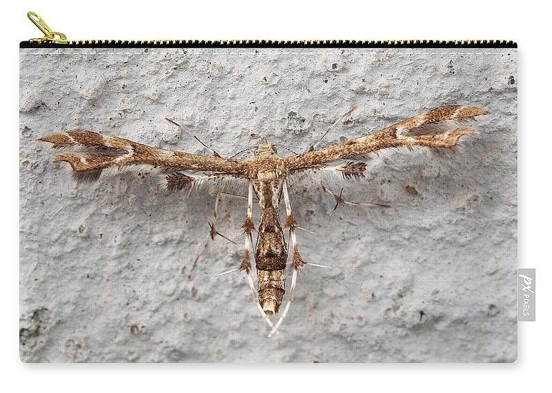Plume Moth Carry-all Pouch featuring the photograph Plume Moth by Doris Potter