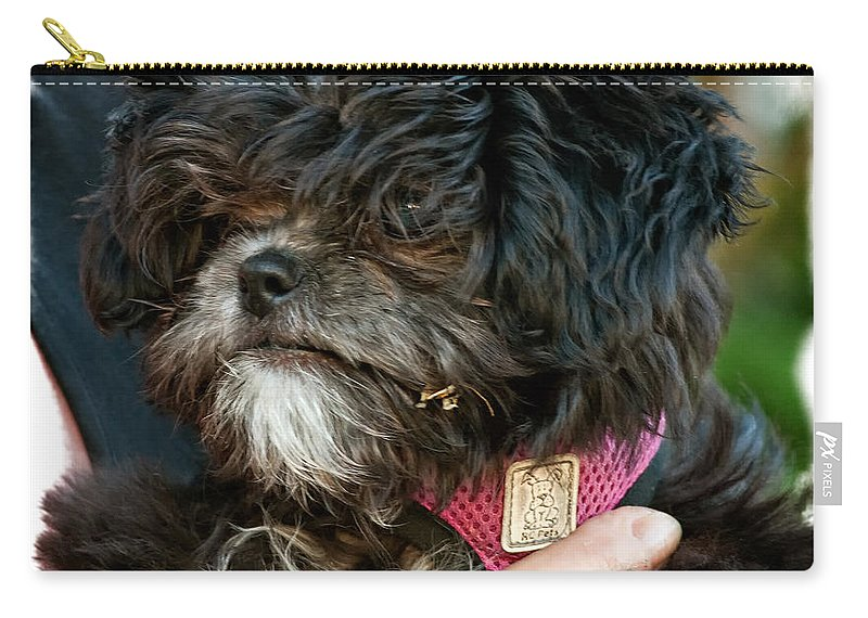 Ragamuffin Carry-all Pouch featuring the photograph Ragamuffin by Steve Harrington
