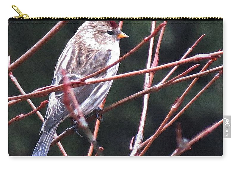 Redpoll Carry-all Pouch featuring the photograph Redpoll by MTBobbins Photography