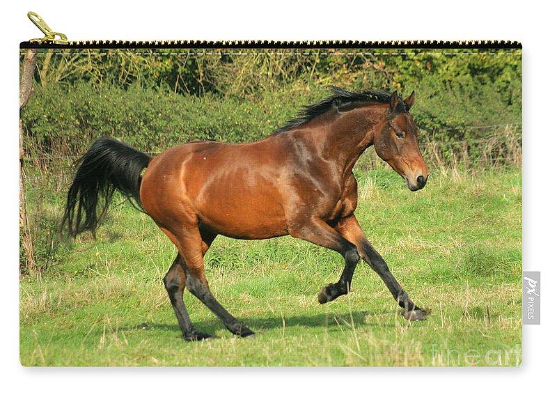 Horse Carry-all Pouch featuring the photograph Run Run by Angel Ciesniarska