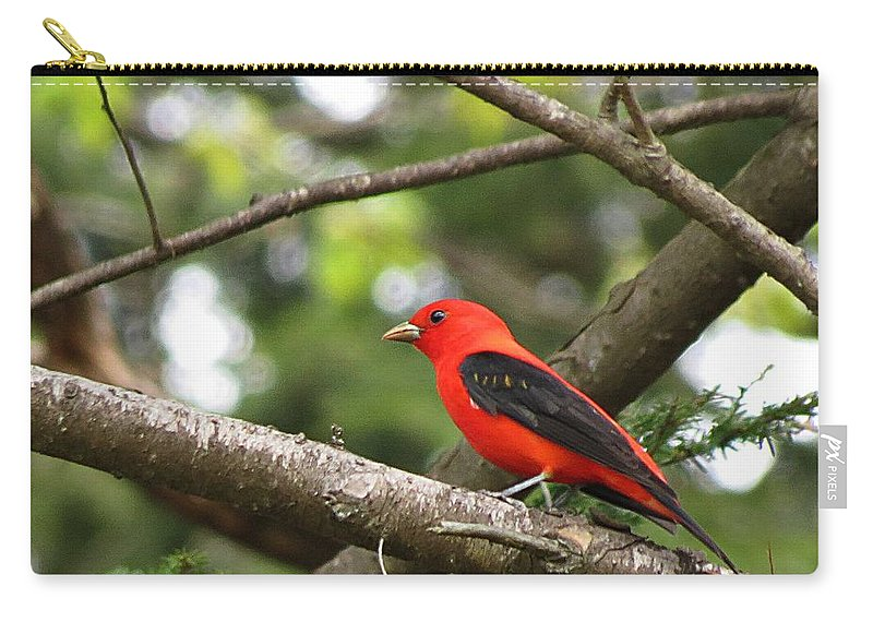 Scarlet Tanager Carry-all Pouch featuring the photograph Scarlet Tanager by MTBobbins Photography