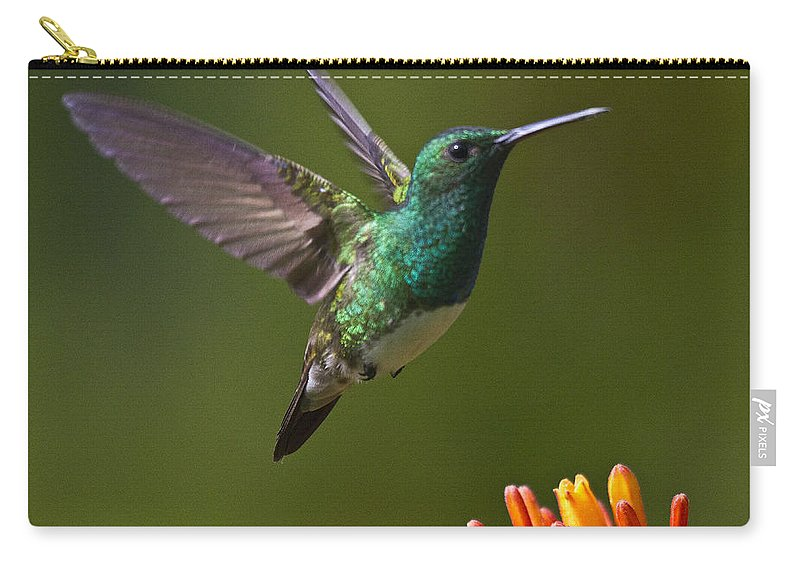 Bird Carry-all Pouch featuring the photograph Snowy-bellied Hummingbird by Heiko Koehrer-Wagner