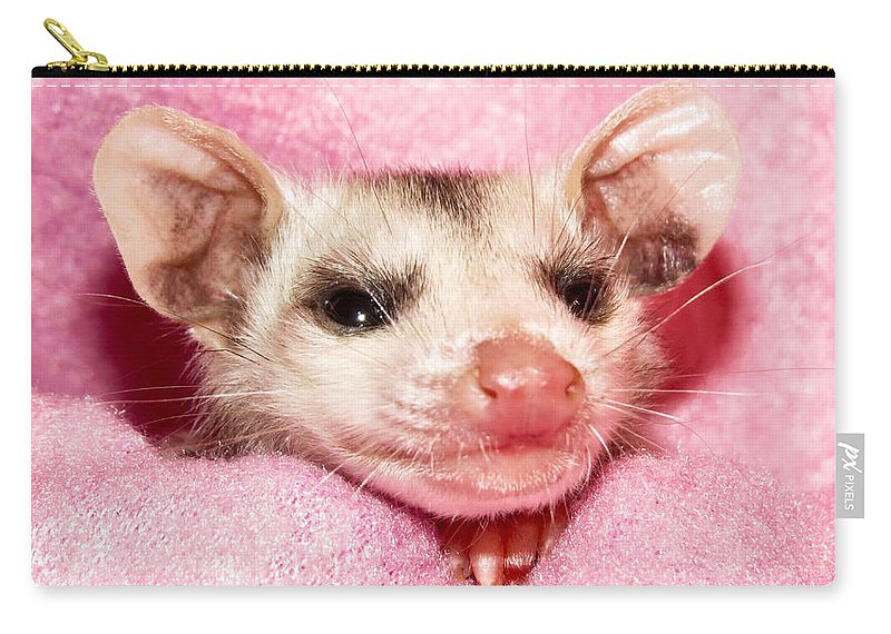 Opossum Carry-all Pouch featuring the photograph Snuggle Bug by Art Dingo