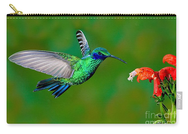 Animal Carry-all Pouch featuring the photograph Sparkling Violetear by Anthony Mercieca