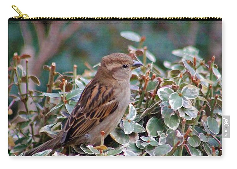 Bird Carry-all Pouch featuring the photograph Spring Beauty by Stephanie Hanson