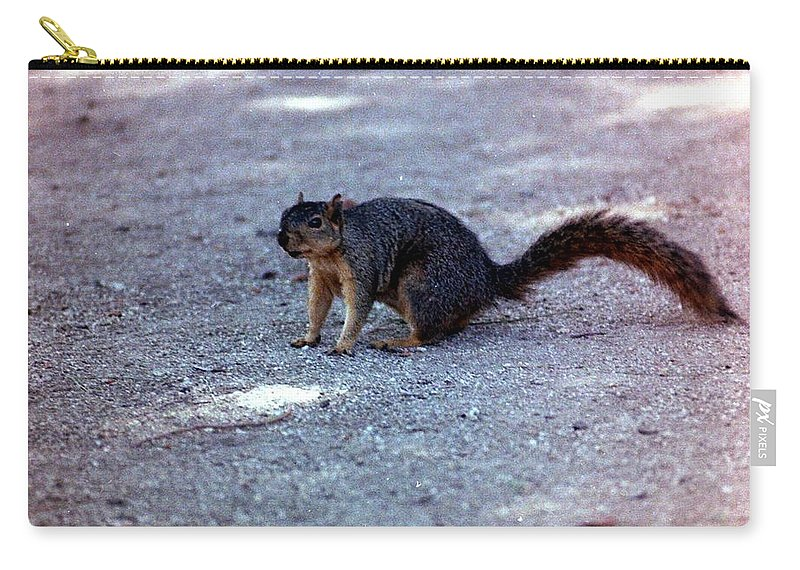 Squirrels Carry-all Pouch featuring the photograph Squirrel by Karl Rose