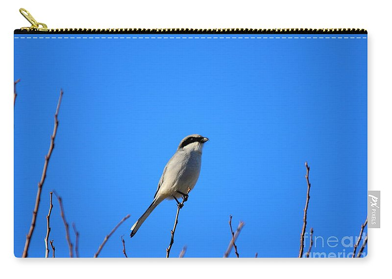 Reid Callaway The Lookout Carry-all Pouch featuring the photograph The Lookout Shrike Or Butcher Bird Art by Reid Callaway