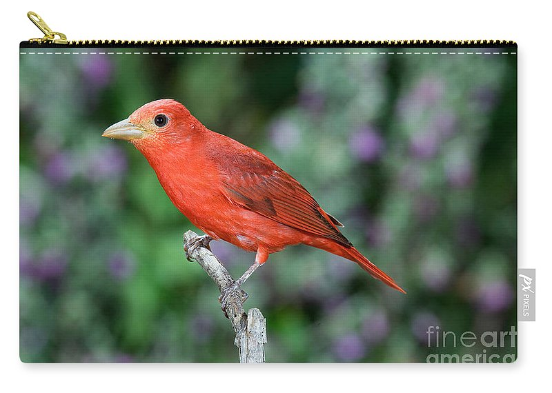 Summer Tanager Carry-all Pouch featuring the photograph Summer Tanager by Anthony Mercieca