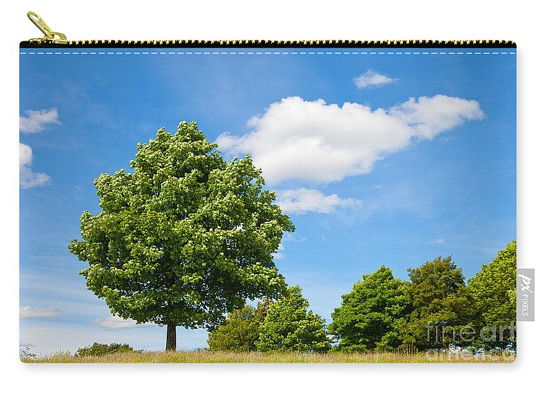 Sycamore Carry-all Pouch featuring the photograph Sycamore Acer Pseudoplatanus by Liz Leyden