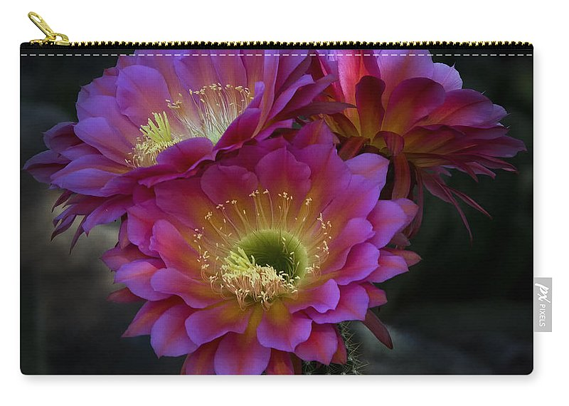 Night Blooming Cactus Carry-all Pouch featuring the photograph The Beauty Of The Desert by Saija Lehtonen
