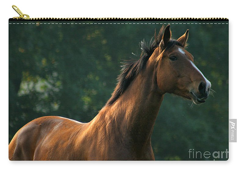 Horse Carry-all Pouch featuring the photograph The Observer by Angel Tarantella