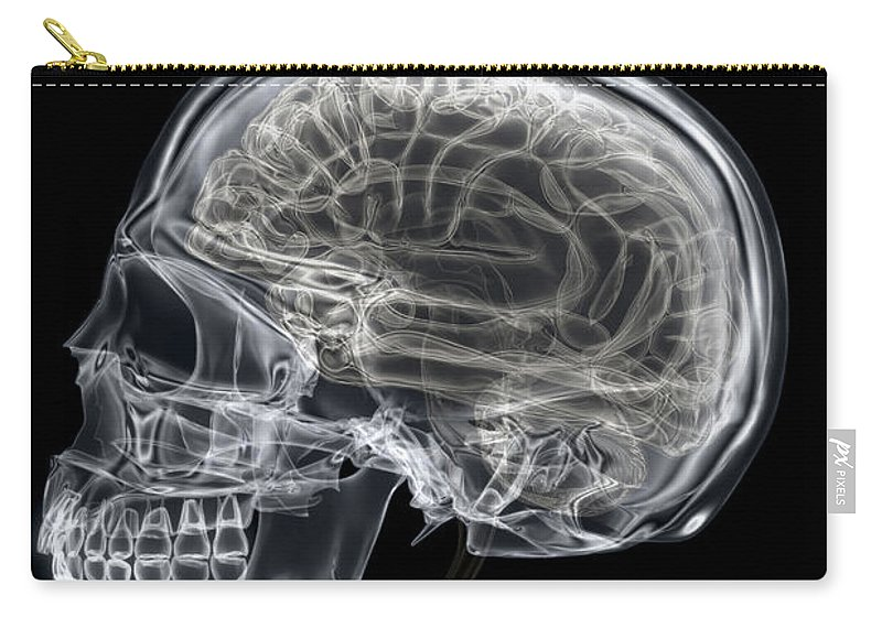 Frontal Lobe Carry-all Pouch featuring the photograph The Skull And Brain by Science Picture Co