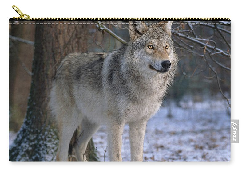 Gray Wolf Carry-all Pouch featuring the photograph Timber Wolf by Hans Reinhard