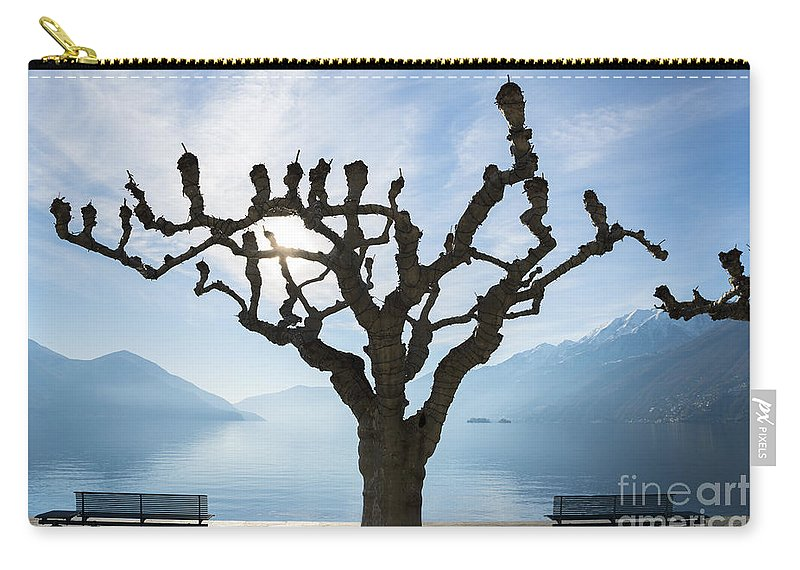 Tree Carry-all Pouch featuring the photograph Tree And Bench by Mats Silvan