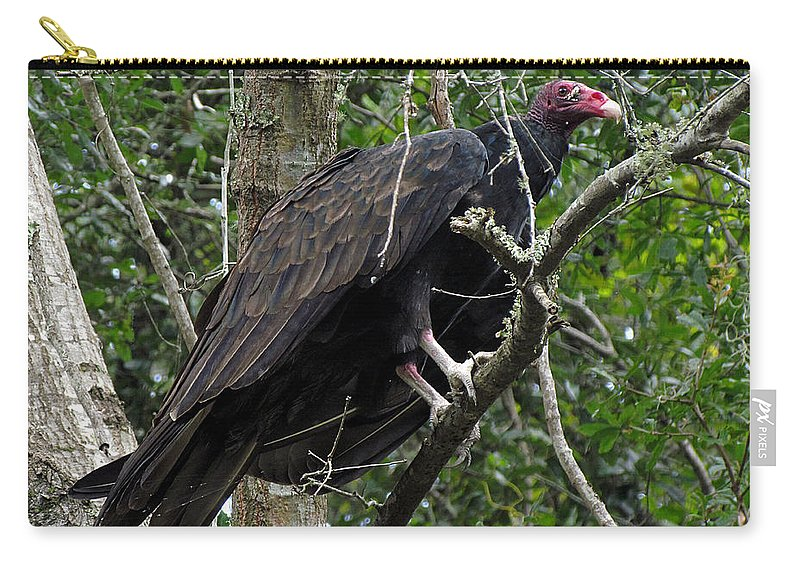 Buzzard Carry-all Pouch featuring the photograph Turkey Buzzard by J M Farris Photography