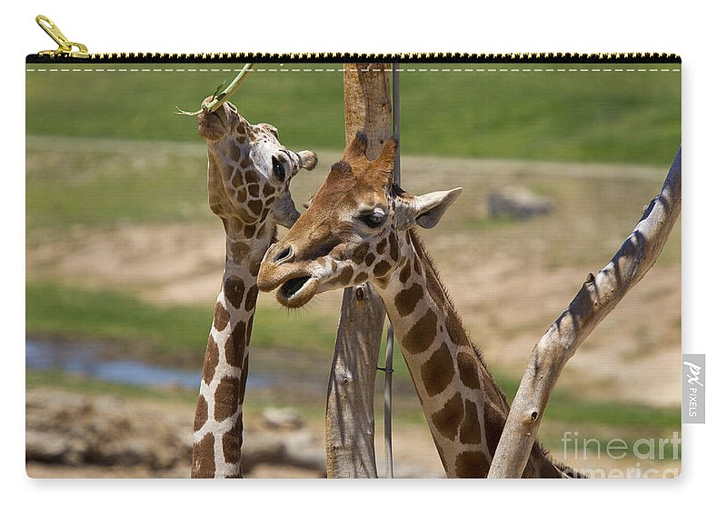 Travel Carry-all Pouch featuring the photograph Two Reticulated Giraffes - Giraffa Camelopardalis by Jason O Watson