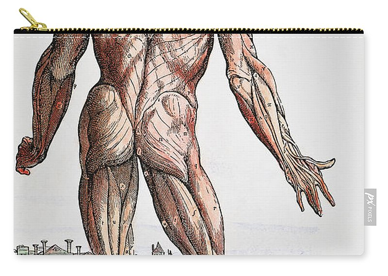 1543 Carry-all Pouch featuring the photograph Vesalius: Muscles, 1543 by Granger