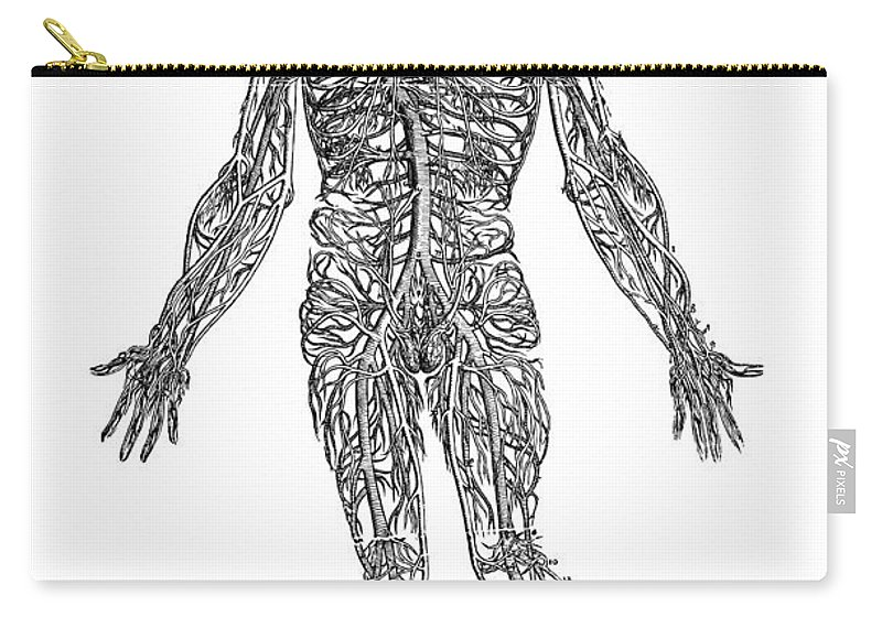 1543 Carry-all Pouch featuring the photograph Vesalius: Venous System by Granger