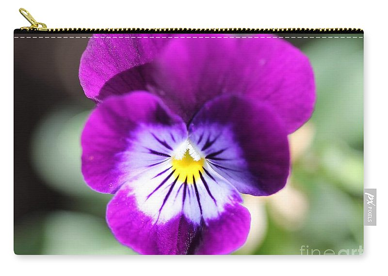 Mccombie Carry-all Pouch featuring the photograph Viola Named Sorbet Plum Velvet Jump-up by J McCombie