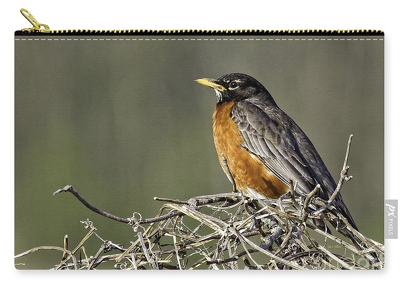 Songbird Carry-all Pouch featuring the photograph Watchful Eye by Jan Killian