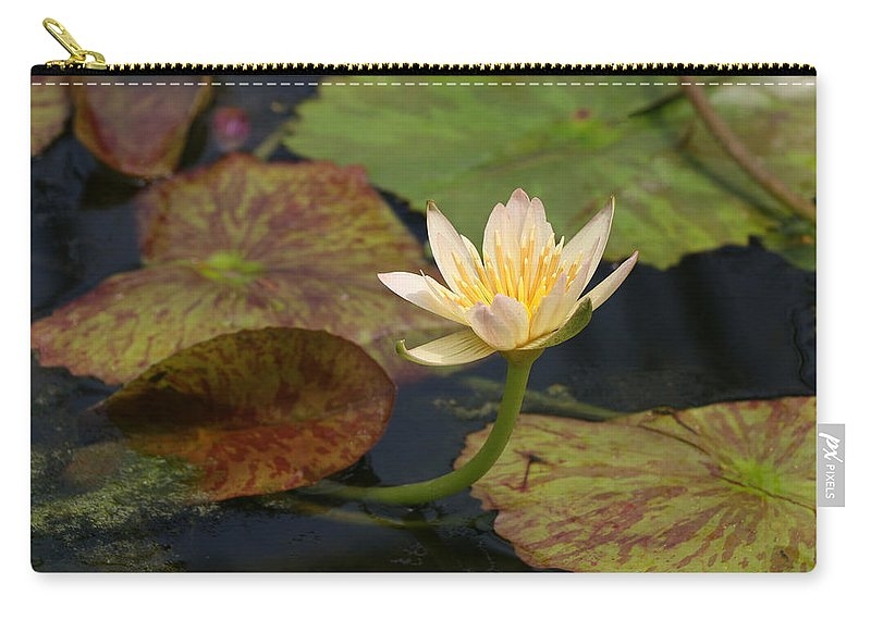 Water Lillies Carry-all Pouch featuring the photograph Water Lily 25 by Allen Beatty