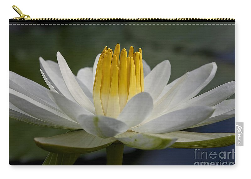Water Llilies Carry-all Pouch featuring the photograph Water Lily by Heiko Koehrer-Wagner