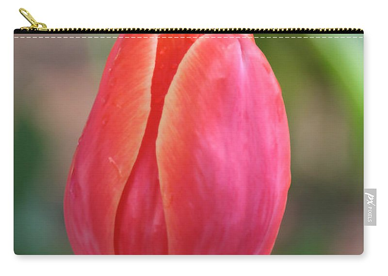 Flower Carry-all Pouch featuring the photograph Watermelon Tulip by Susan Herber