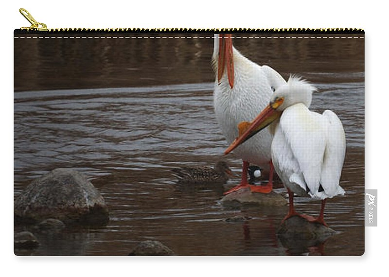 American White Pelican Carry-all Pouch featuring the photograph White Pelicans by Ernie Echols