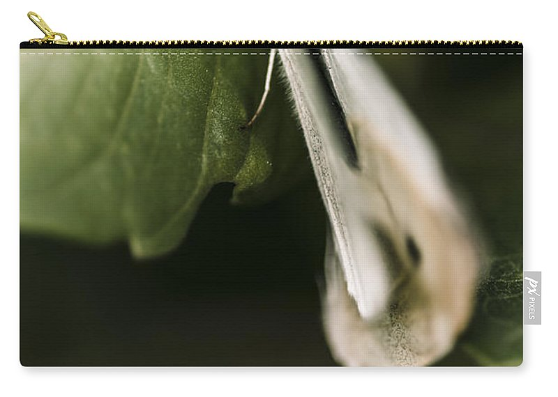 Macro Carry-all Pouch featuring the photograph White Winged Moth Insect On A Green Tree Leaf by Jorgo Photography - Wall Art Gallery
