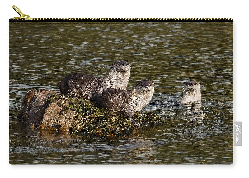 Otters Carry-all Pouch featuring the photograph Yellowstone Otters by Yeates Photography